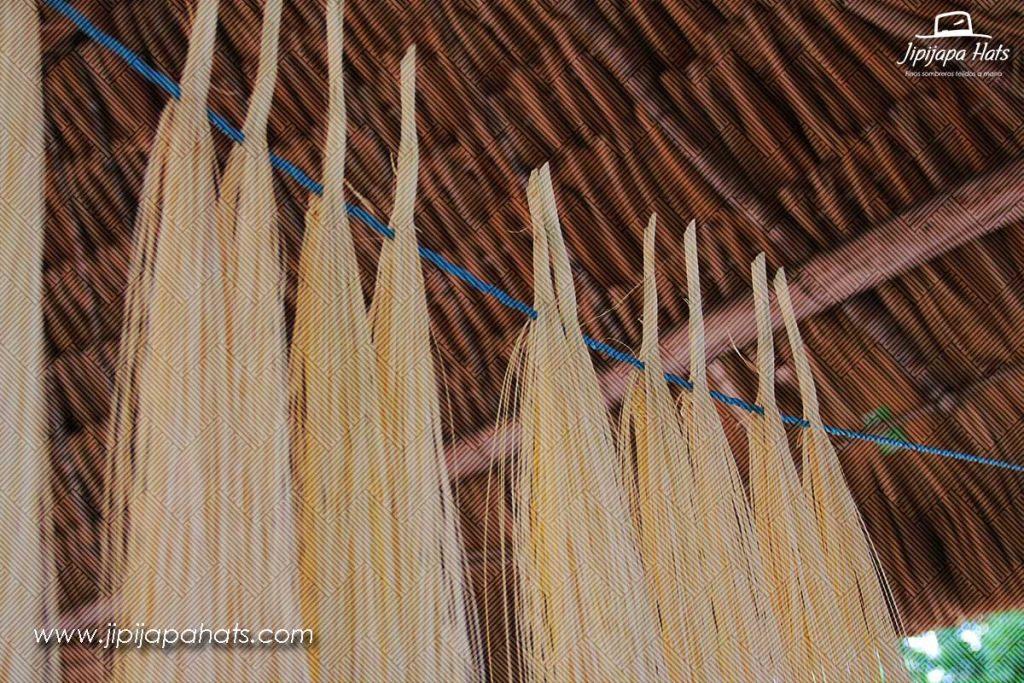 Secado de la palma de Jipi