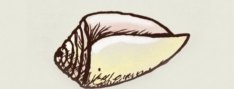 Concha utilizada durante el proceso de fabricación de un sombrero